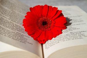 Ein Buch mit Blumen